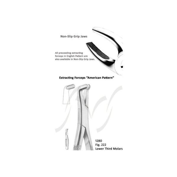 American Lower Third Molars Fig 222