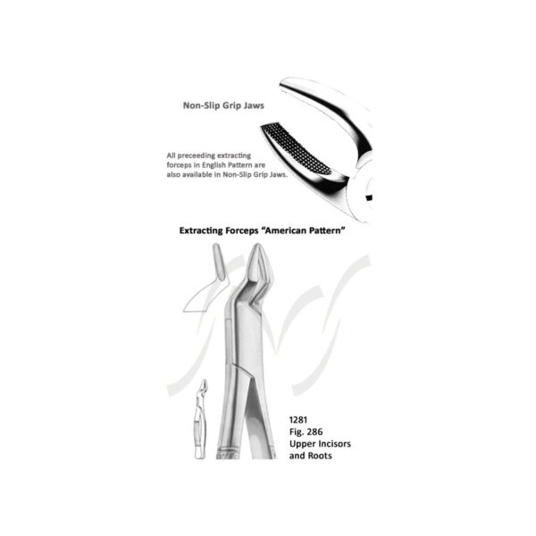 American Upper Incisors and Roots Fig 286