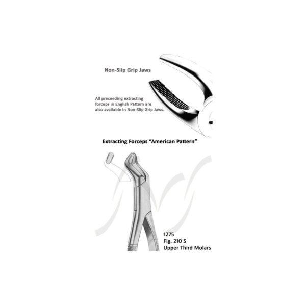 American Upper Third Molars Fig 210 S