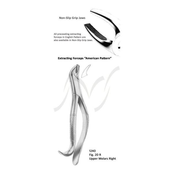 American Upper Molars Right Fig 20 R