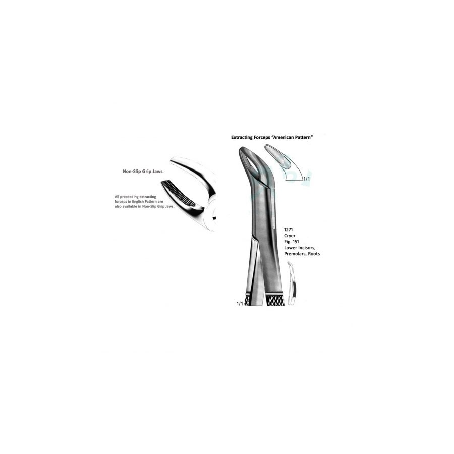 Cryer American Lower Incisors Premolars Roots Fig 151