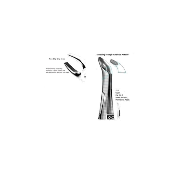 Cryer American Lower Incisors Premolars Roots Fig 151 A